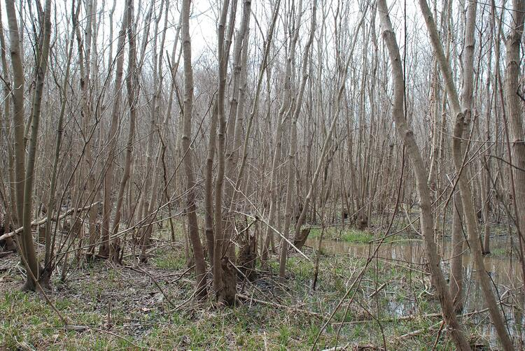 Southeast invasive tree species